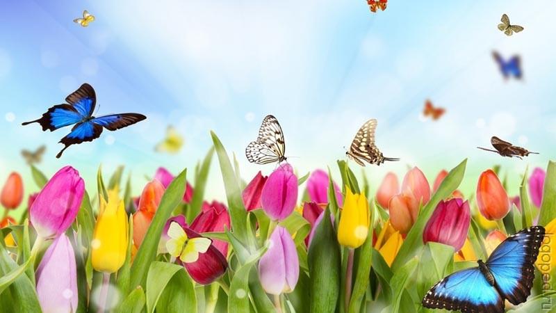 конспект весна в природе для детей с онр в детском саду