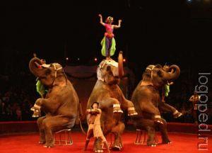 Конспект открытой итоговой   непосредственно-образовательной деятельности по произносительной   стороне речи в логопедической группе на тему: 'Цирк'.