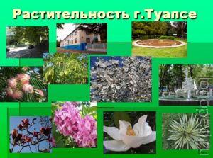 Презентация Растения Северного Кавказа